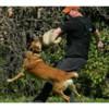 Elite Dog Training